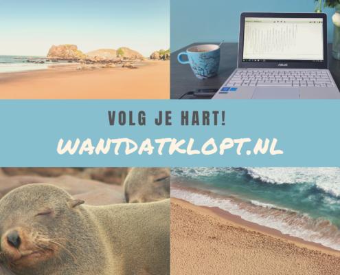 grid met rustgevende afbeeldingen in blauw, zee, strand, slapende zeehond en laptop van wantdatklopt.nl